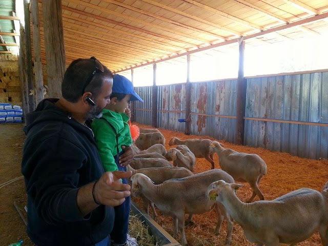Μια μέρα στη φάρμα