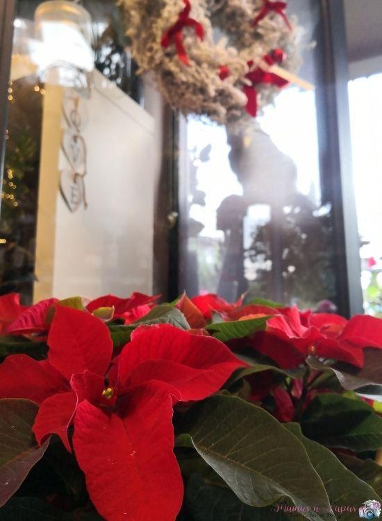 Τι λουλούδια να πάρω τα Χριστούγεννα